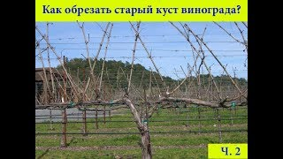 Как обрезать старый куст винограда - часть 2.avi