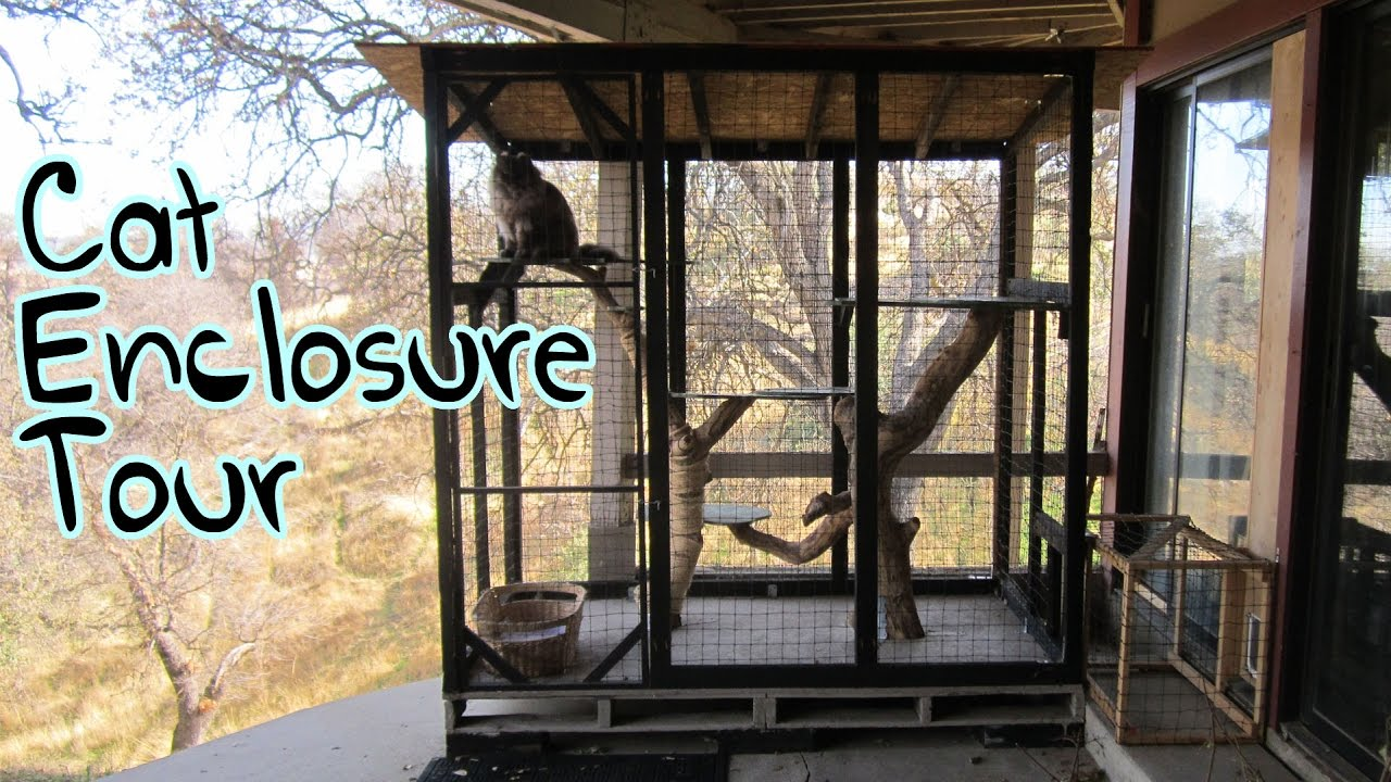 Outdoor Cat Enclosure Attached To House