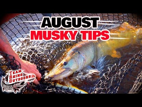Musky Fishing Basics - August Musky Fishing Tips