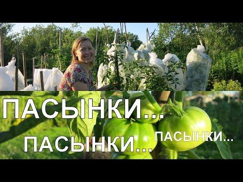 Как удалять ПАСЫНКИ у помидоров 🍅 / Removing Tomato Suckers