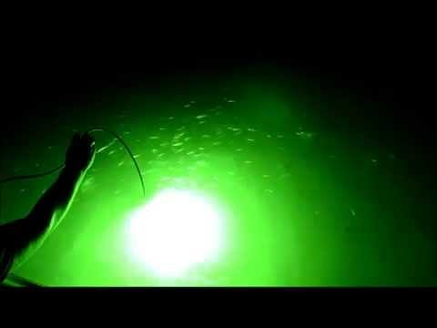The Green Blob Underwater LED FIshing Light In Action!