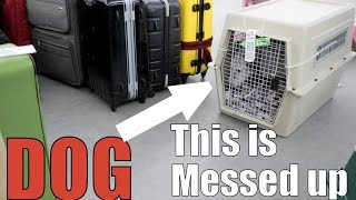 DOG TRAVELS TO DIFFERENT COUNTRY IN BAGGAGE CLAIM!!