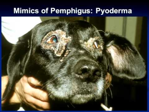 Mimics For Autoimmune Skin Diseases