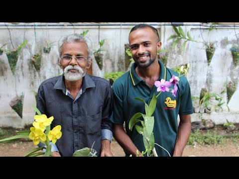 Fast Growing Orchid Plant Ideas| Best Orchid Porting Method And Its Fertilizers Malayalam