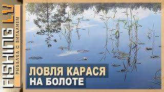 Ловля карася на болоте, живописные места, дикая природа | Karūsu cope, Smārde purvi
