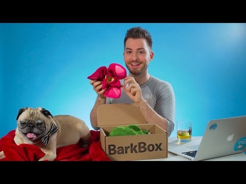 Unboxing The March Bento And Blossoms BarkBox With Our Office Pug, Noodle!