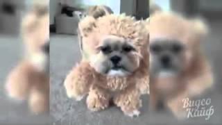 Смешные собаки в костюмах