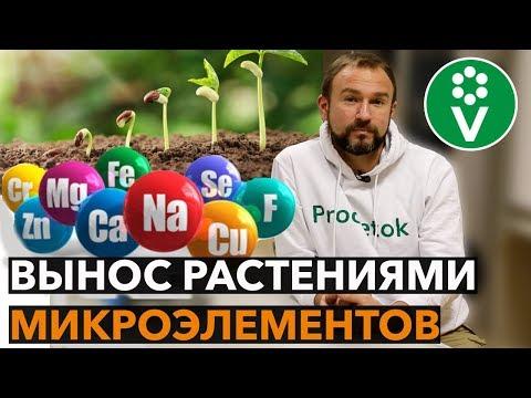 Правила СЕВООБОРОТА овощных культур