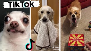 Funny Dogs of TikTok & Cute Puppies of Instagram Compilation!