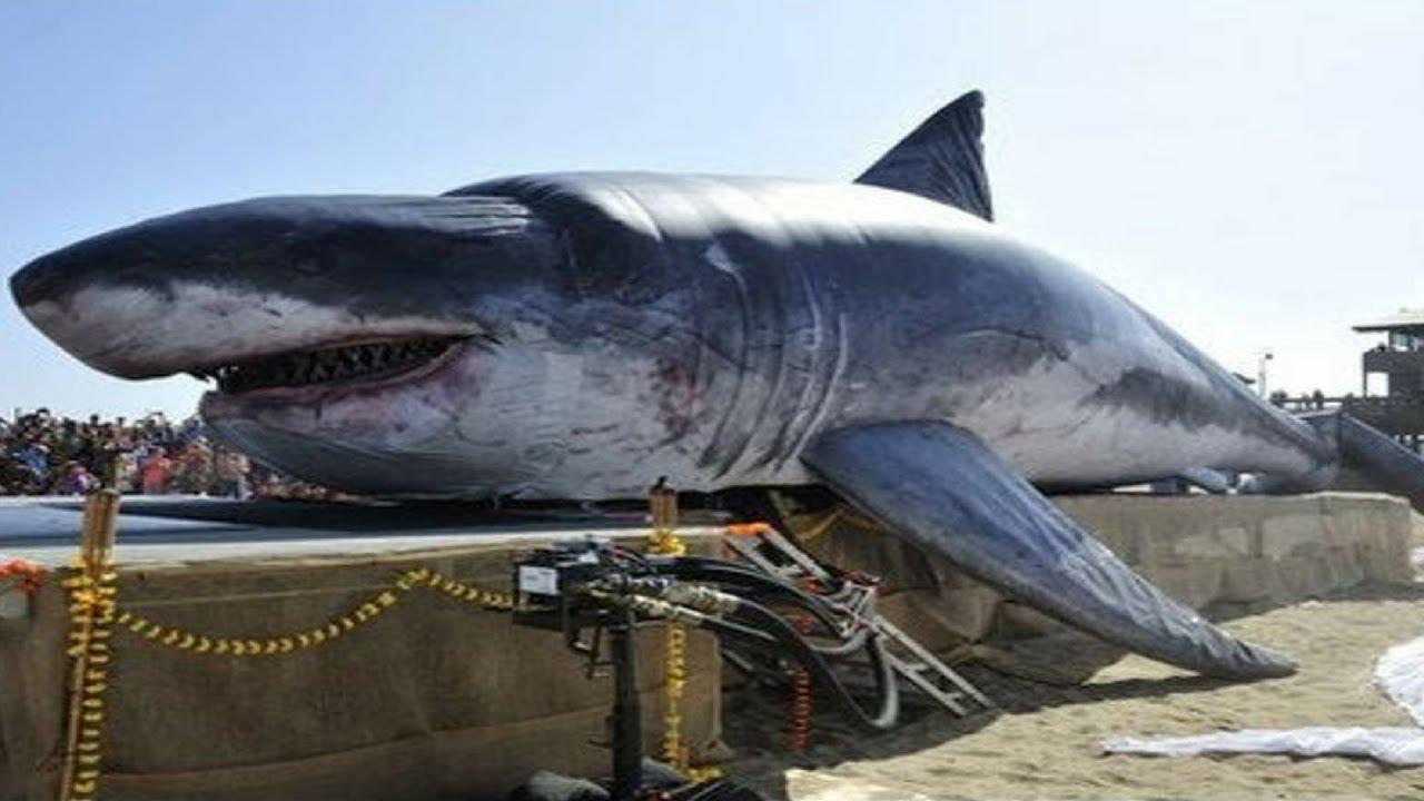 Megalodonte la leggenda degli abissi documentario mostra for Immagini squali da stampare