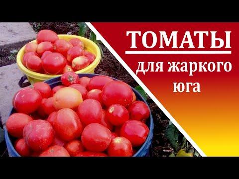 Какие томаты сажать  на юге России | выращивание | урожайные | открытого | томатов | помидор | томаты | сажать | россии | лучшие | кубани