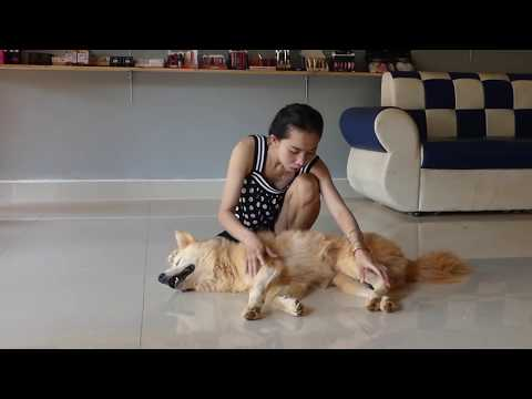 FREE TIME REMOVE SOME BAD THING ON MY DOG BODY from YouTube · Duration:  10 minutes 23 seconds