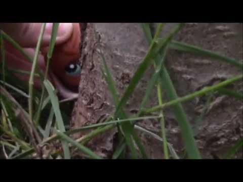 ❤LPS MV: Escape For BunnySlipinVids (Read Desc!) ❤