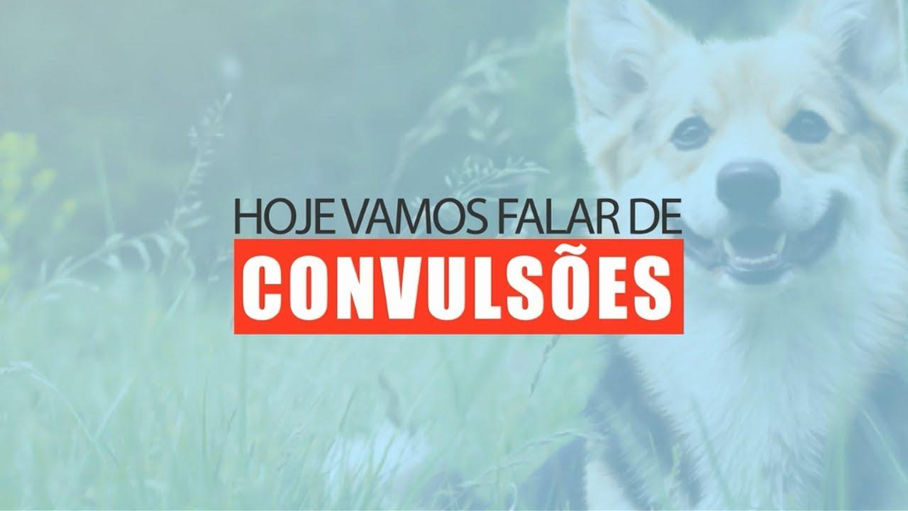 Convulsões em Cães e Gatos (Arca de Noé Clínica Veterinária)