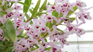 Havayı Temizleyen Oksijen sağlayan Ev Bitkileri -1-