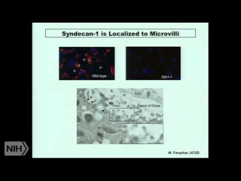 Proteoglycans: Arbiters of Lipoprotein Metabolism