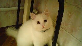 Смешаные кошки.Сентябрь 2013
