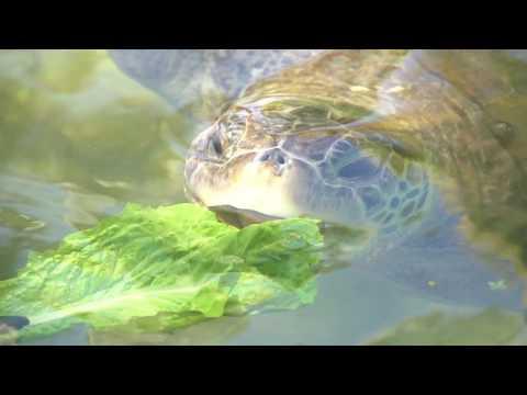 Meet The Sea Turtle - Florida Keys & Key West - Theater of the Sea