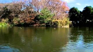 (12/11)  日本池の1部 (1)