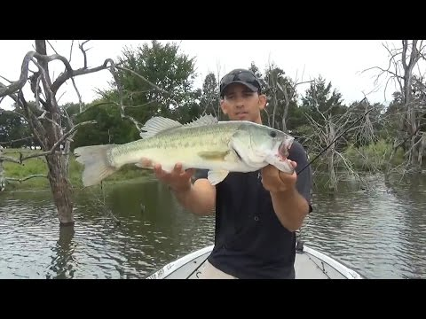 Wacky Worms for Largemouth Bass Fishing