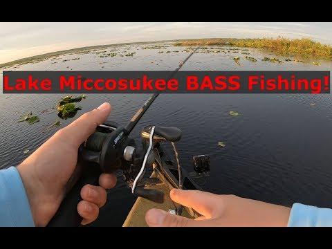Lake Miccosukee Bass Fishing! Gmoneystrong Online Tournament!
