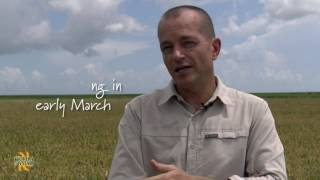 Florida Crystals Rice Farms:  Successful Planting is Key