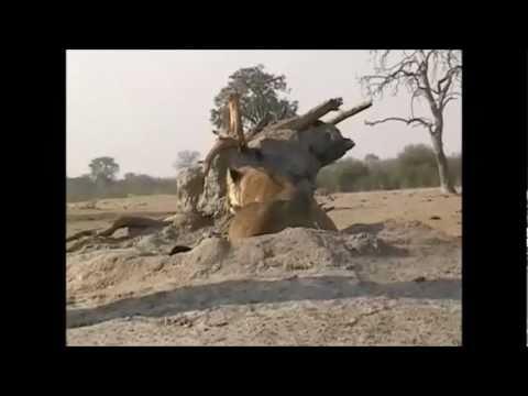 Hwange NP - Zimbabwe
