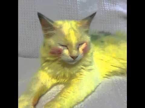 kitty litter alternatives
