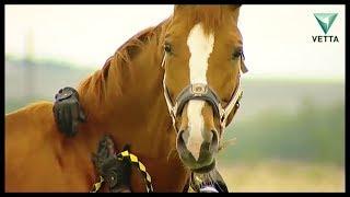 О чём следует знать, если вы решили завести лошадь