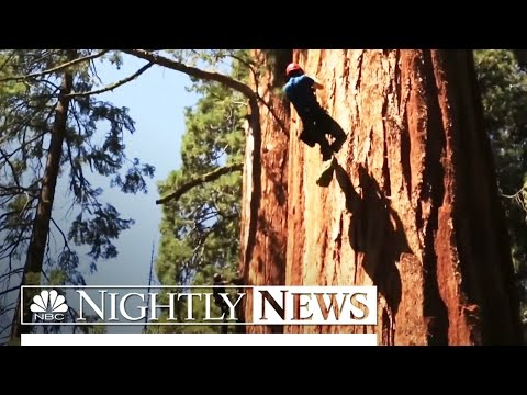California's Ancient Sequoias Threatened By Record Drought | NBC Nightly News