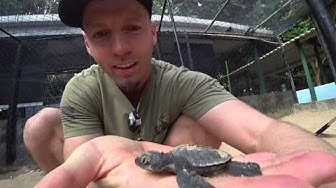 Sri Lanka's Sea Turtle Savior