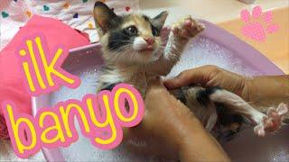 Yavru kedi yıkanmaz! / Çok mecbur kalmadıkça