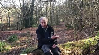 Carbon change in Pallinghurst Woods with President of Sussex Wildlife Trust, Dr Tony Whitbread.