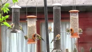 Busy Garden Bird Feeder