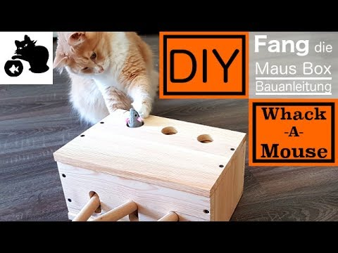 diy katzenspielzeug selber bauen diy whack a mouse box. Black Bedroom Furniture Sets. Home Design Ideas
