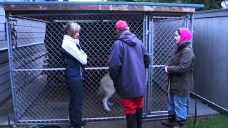 Dog Training Victoria Bc