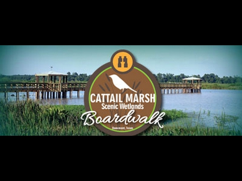 Beaumont Texas Cattail Marsh Scenic Wetlands and Boardwalk 2017