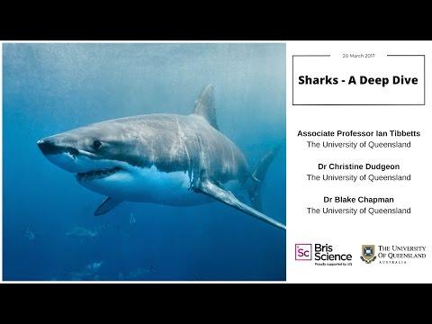 BrisScience (March 2017): Sharks - A deep dive