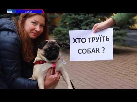 ТРК РАІ: Розслідування масового отруєння собак триває