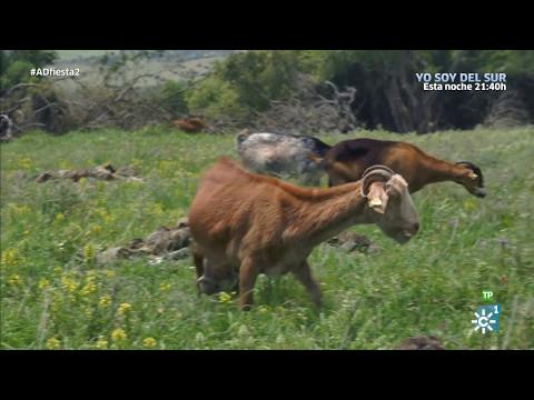 Destino Andalucía: Pastoreo por la playa de Bolonia y visita a la Málaga más burguesa