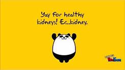 hqdefault - Missing Kidney At Birth