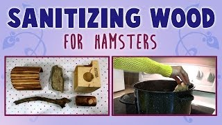 Sanitizing Wood (for hamsters) Thumbnail