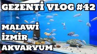 Gezenti Vlog #42 (Malawi İzmir Akvaryum)