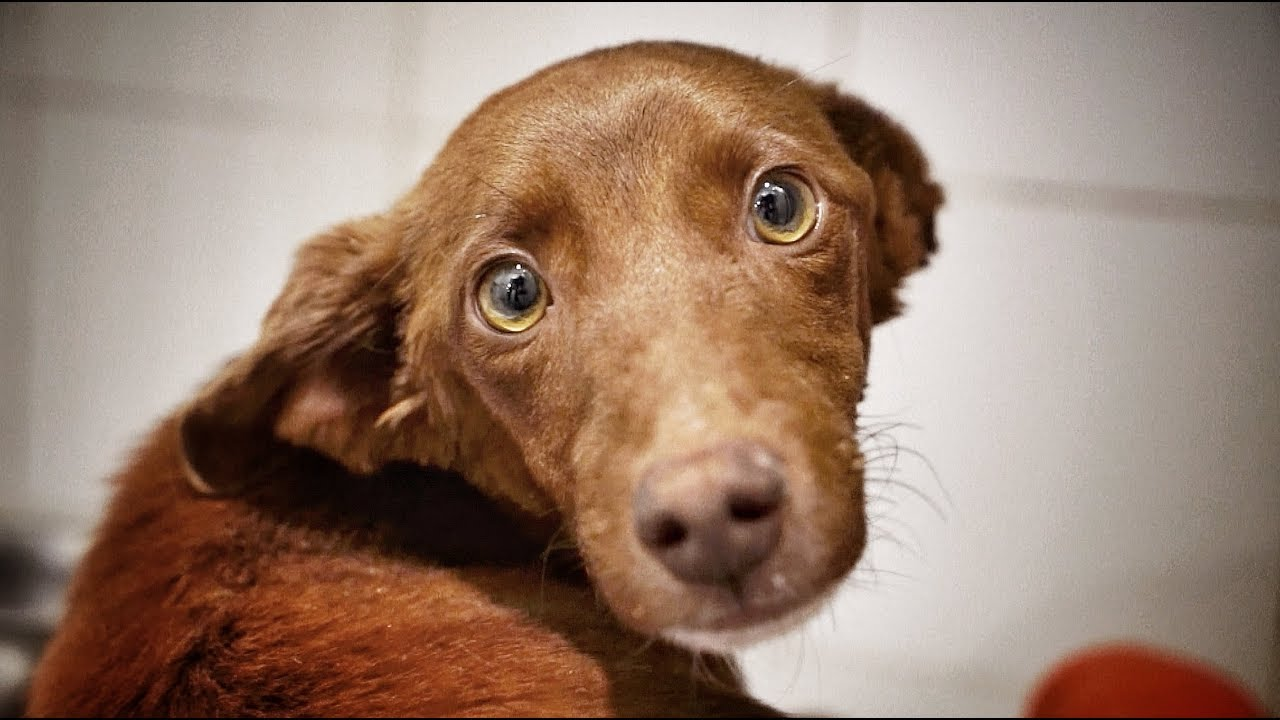 live-rescue-brownie-the-dog-found-dying-by-the-roadside