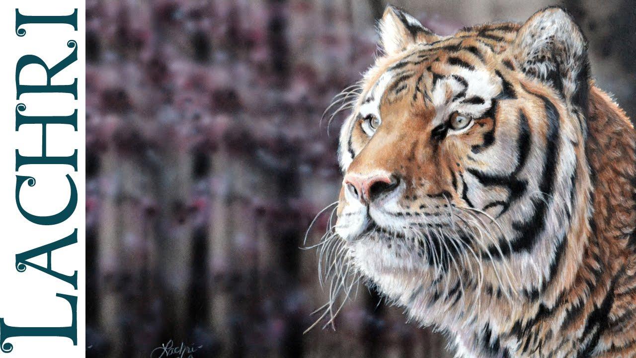 Essay on tigers
