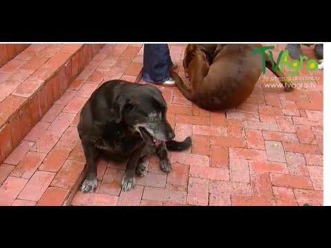 curvo perra sentado en la cara