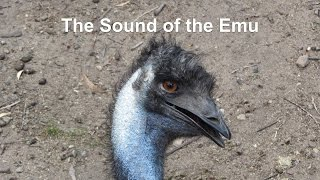 The Sound of the Emu