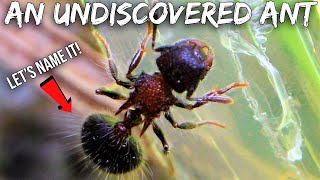 Discovering & Naming A New Species of Ant in My Yard