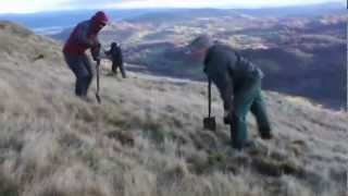 Juniper Planting with the Cumbria Wildlife Trust