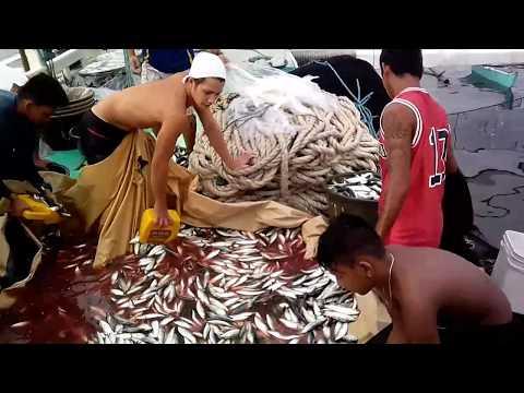 Amazing fishing tangos navotas Cybelle